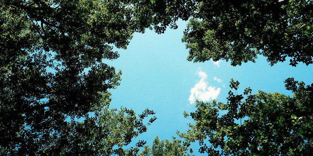 EP#276 - Der Himmel ist grün, Basti